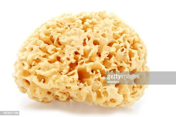 Isolated Bath Sponge