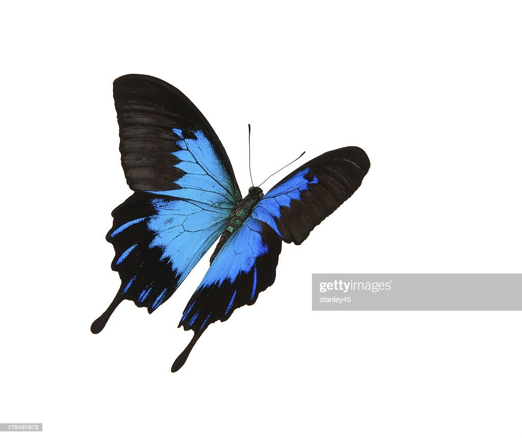 butterfly stock photos and pictures getty images