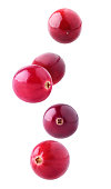 Isolated flying berries. Five falling cranberry fruits isolated on white background with clipping path