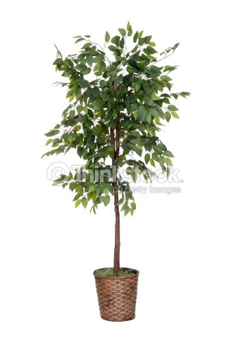 isolated fake tree : Stock Photo