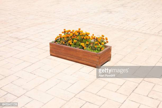 Isolated Flower Box On Tiled Floor