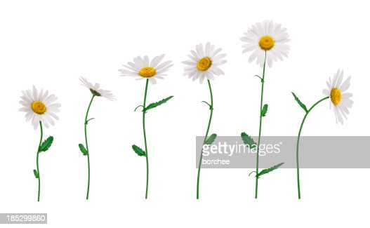 Isolated Flowers