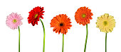 Isolated flowers in a row.