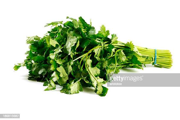 Isolated Fresh Cilantro