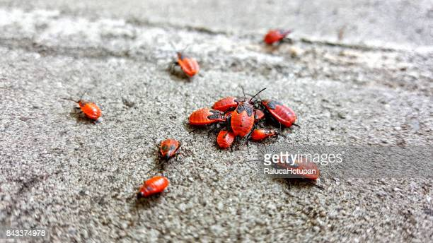 isolated group of firebugs gathered in the sun on concrete