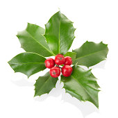 holly isolated on white, clipping path included