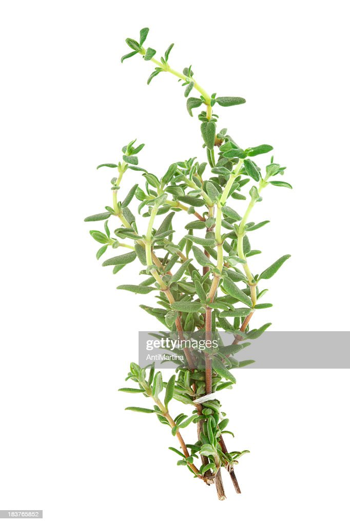 thyme (thymus)  isolated on white