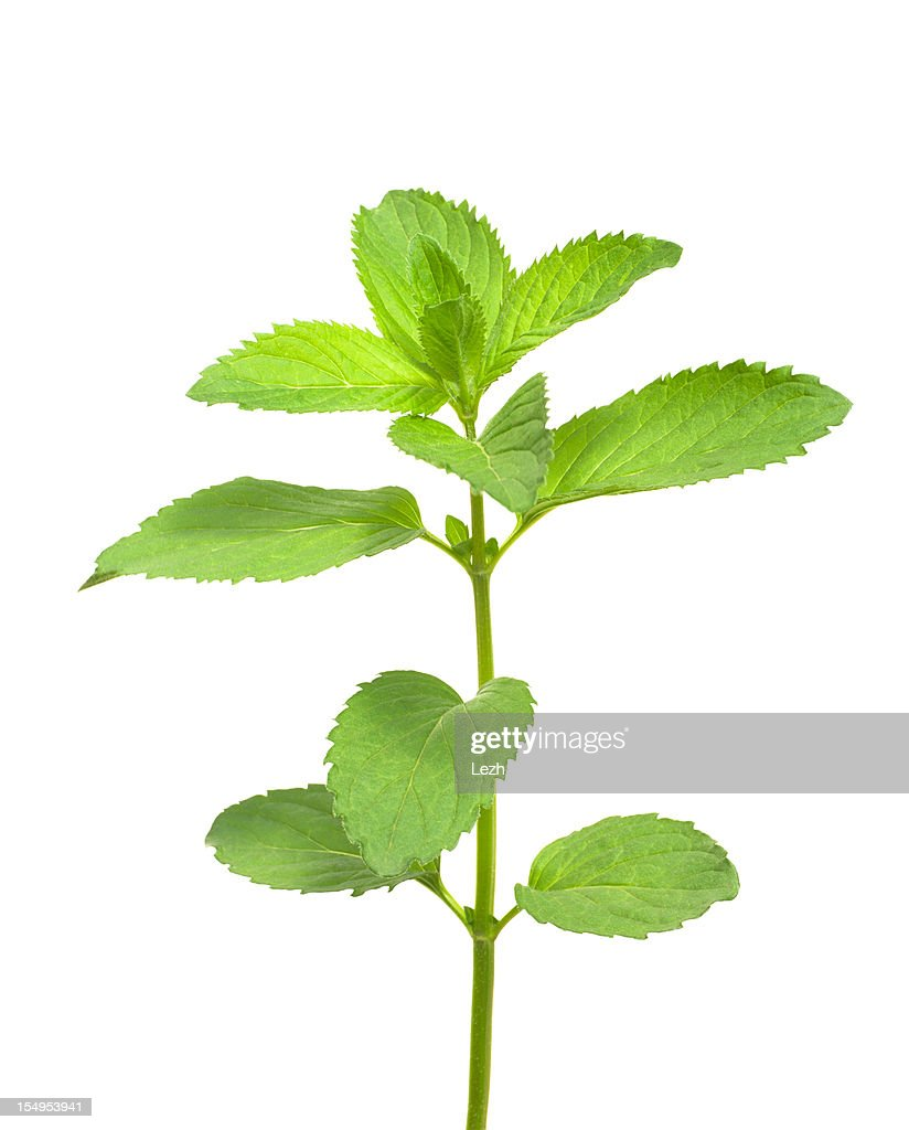 Isolated Mint