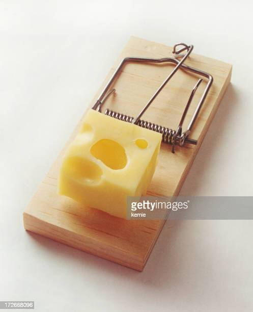 Isolated mouse trap open and loaded with Swiss cheese