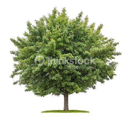 isolierte servicebaum mit obst auf wei em hintergrund stock foto thinkstock. Black Bedroom Furniture Sets. Home Design Ideas