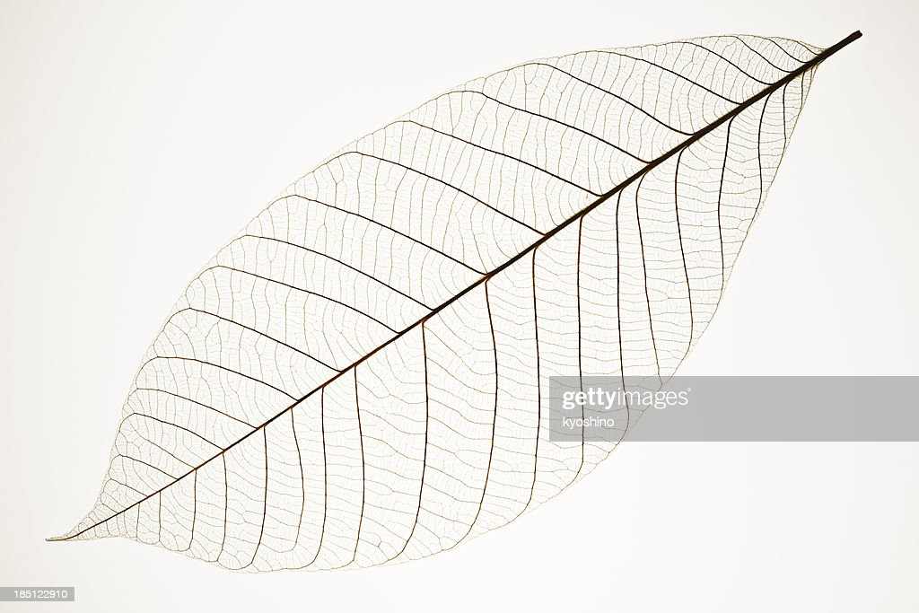 Perfect Leaf Veins