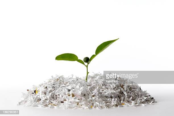 Isolated shot of plant growing shredded paper on white background