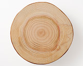 Close-up of tree cross section isolated on white background with clipping path.