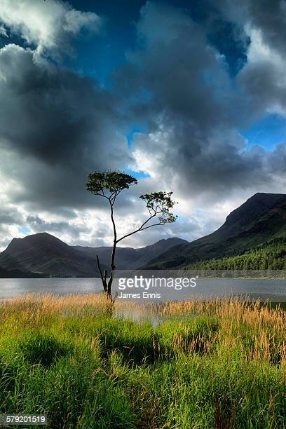 Isolated tree, Buttermere, English lake district