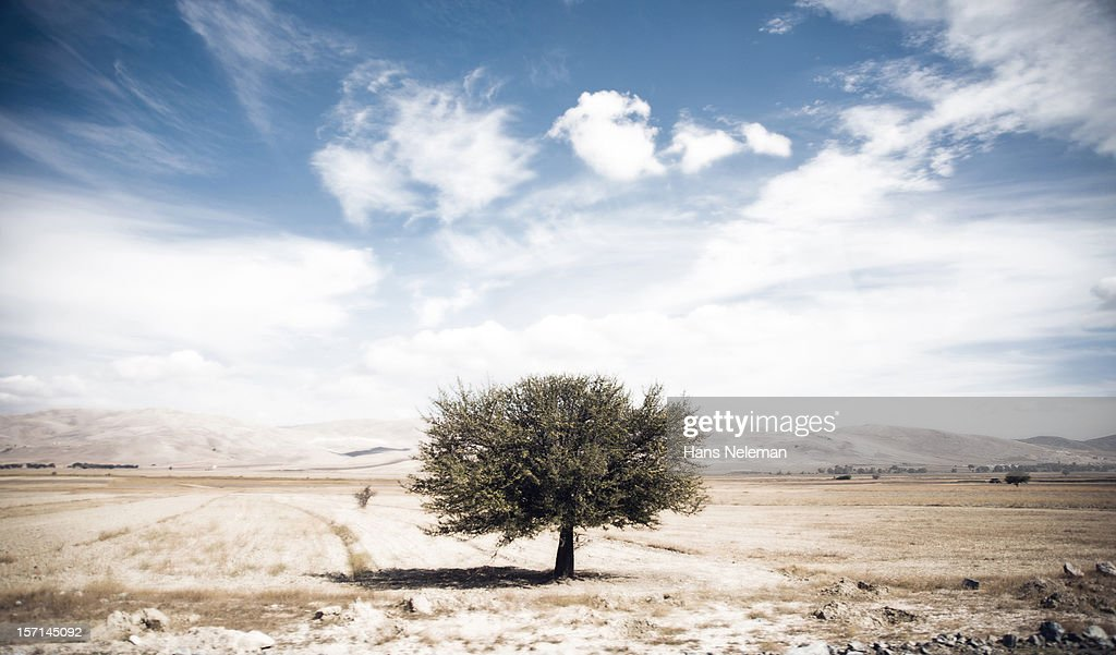 Isolated tree in field : Stock Photo