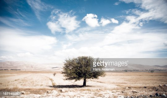 Isolated tree in field : Foto de stock