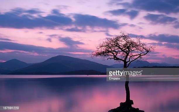 Isolated tree on Milarrochy Bay, Loch Lomond at Sunset