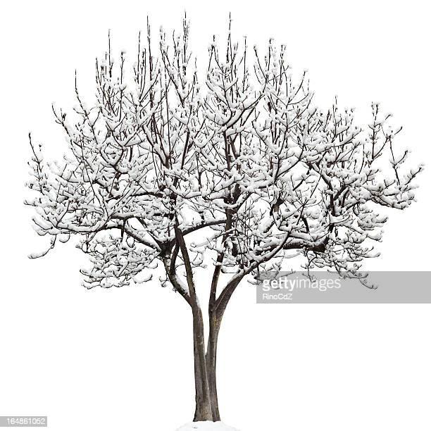 magnolia de soulange photos et images de collection getty images. Black Bedroom Furniture Sets. Home Design Ideas