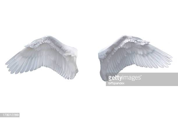 Isolated White Angel Wings