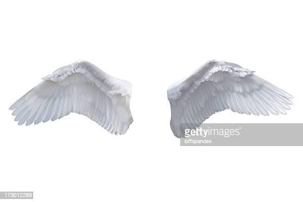 Ailes de l'ange isolé blanc