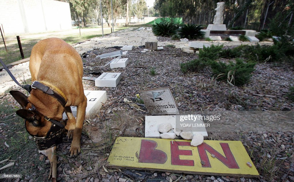 A dog sniffs the ground at the pet cemetery at the Oketz militray base in central Israel 04 December 2005. Oketz is one of the most highly-regarded of the army's units and few infantry commanders would even think about embarking on a mission without the support of a soldier from Oketz and his four-legged companion. The dogs will are taught a range of skills ranging from sniffing out survivors of earthquakes to detecting hidden cashes of arms and explosives. TO