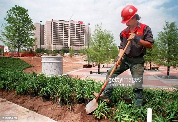 Israel Duran plants shrubs around the site of the Olympic Centennial Park in downtown Atlanta Georgia 08 May The 21 acre park will be the center of...