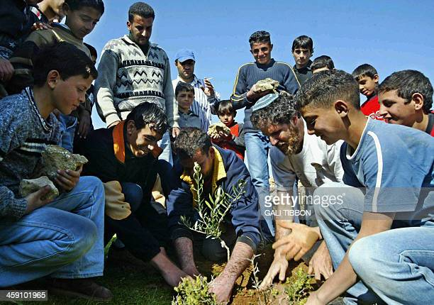 Israeli Rabbi Arik Ascherman from 'Rabbis for Human Rights' plants an olive tree together with Palestinian residents of the West Bank village of...