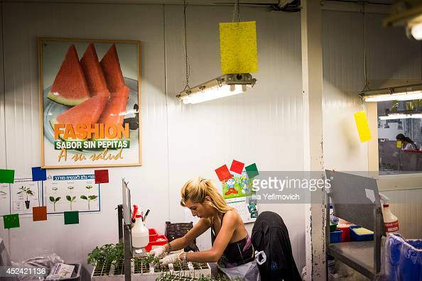 Israeli worker seen checking the seed at agriculture factory as the ground offensive continue on July 20 2014 at city of Ashkelon by the IsraeliGaza...