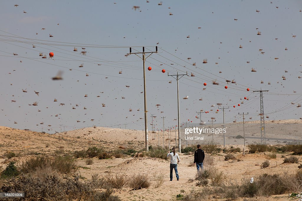 Israelis look at a swarm of locusts arriving over the Negev desert near the Egyptian border on March 6, 2013 in Kmehin, Israel. Egypt and Israel have been swarmed with millions of locusts over the past few days causing wide spread disturbances.