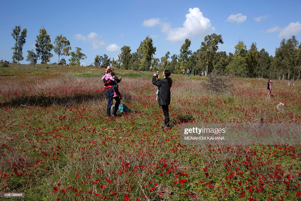 Israelis walk in a field full of Anemone blossom close to Kibbutz Beeri, near the southern Israeli border with the Gaza Strip, on February 6, 2016. / AFP / MENAHEM KAHANA