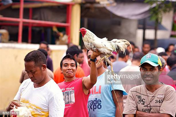 It is East Timor one of the world's youngest nations blood thirsty national sport and a scene replicated throughout the tiny nation every afternoon...