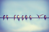 Swallows in conversation against summer sky.