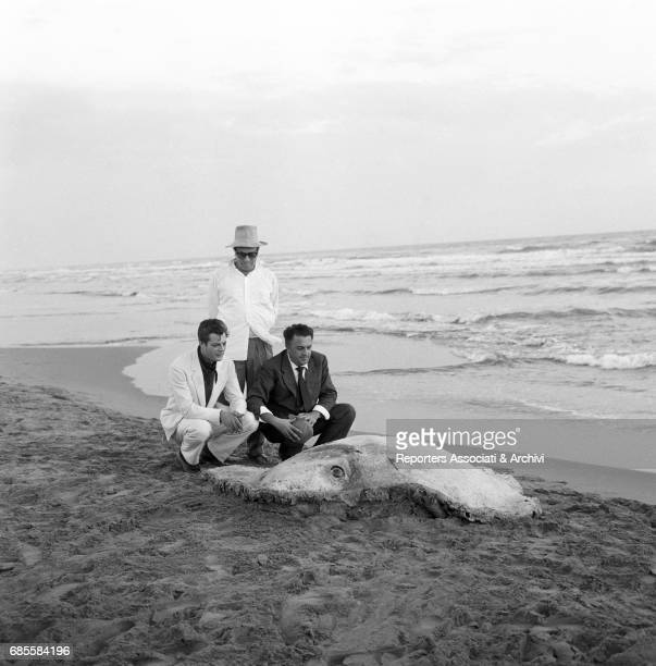 Italian actor Marcello Mastroianni with Italian director Federico Fellini observing a dead manta ray on the beach of Passoscuro hamlet of Fiumicino...