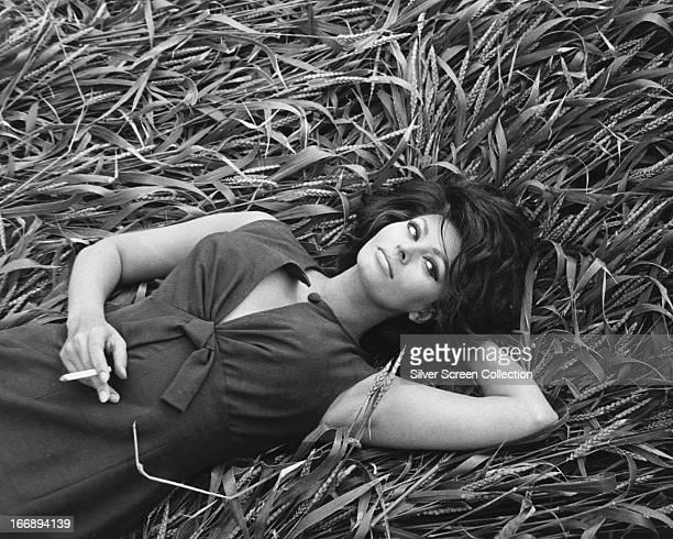 Italian actress Sophia Loren smoking a cigarette while lying in a field of corn circa 1965