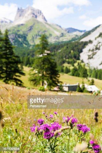 Italian Alps : Stock Photo