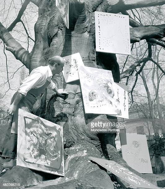 Italian artist Lucio Fontana looks carefully at some of the canvas hanging on the great trunk of the tree in the garden of his Milanese study in...