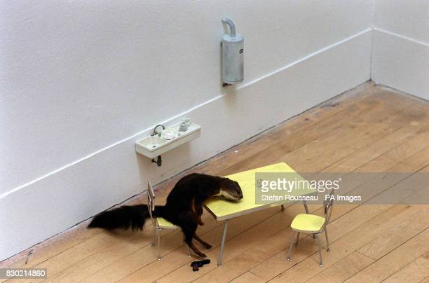 Italian Maurizio Cattelan's Bidibidobidiboo a squirrel which has commited suicide in the Tate Gallery in London part of Abracadabra a provocative new...