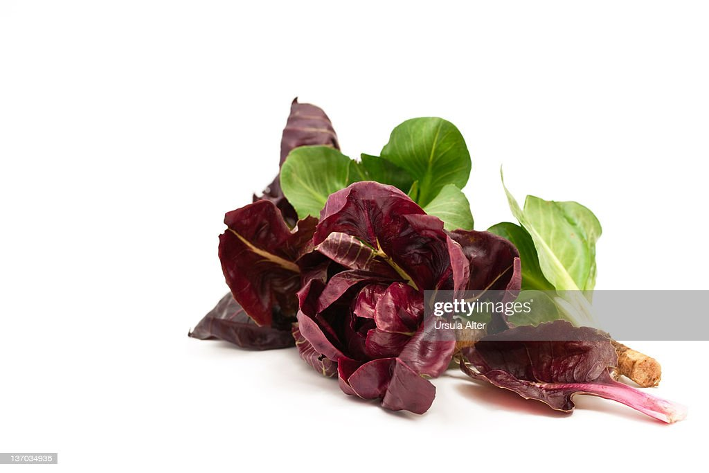 italian red and green radicchio