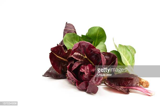italian red and green radicchio