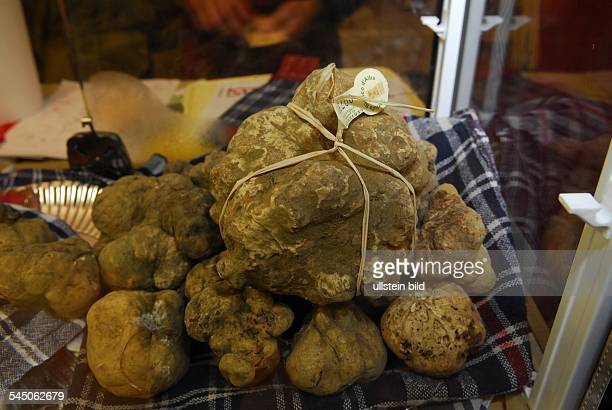 white truffle on the truffle market
