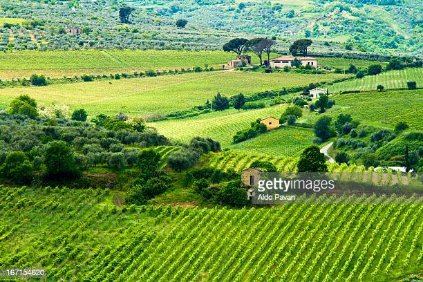 Italy, Basilicata, Barile, vineyards