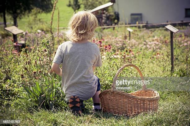 Italy, Bolzano, little boy kneeling in herb garden