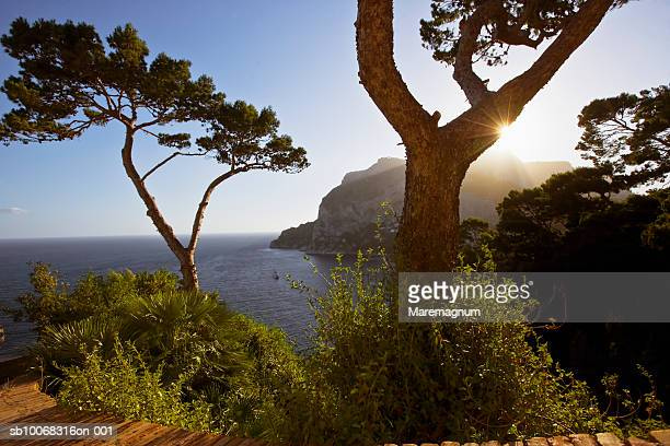 Italy, Campania, Capri Island, Capri, pine trees at sunset
