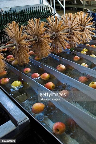 Italy Lombardy Valtellina Tovo Sant'agata Valtellina Consortium Apple Processing