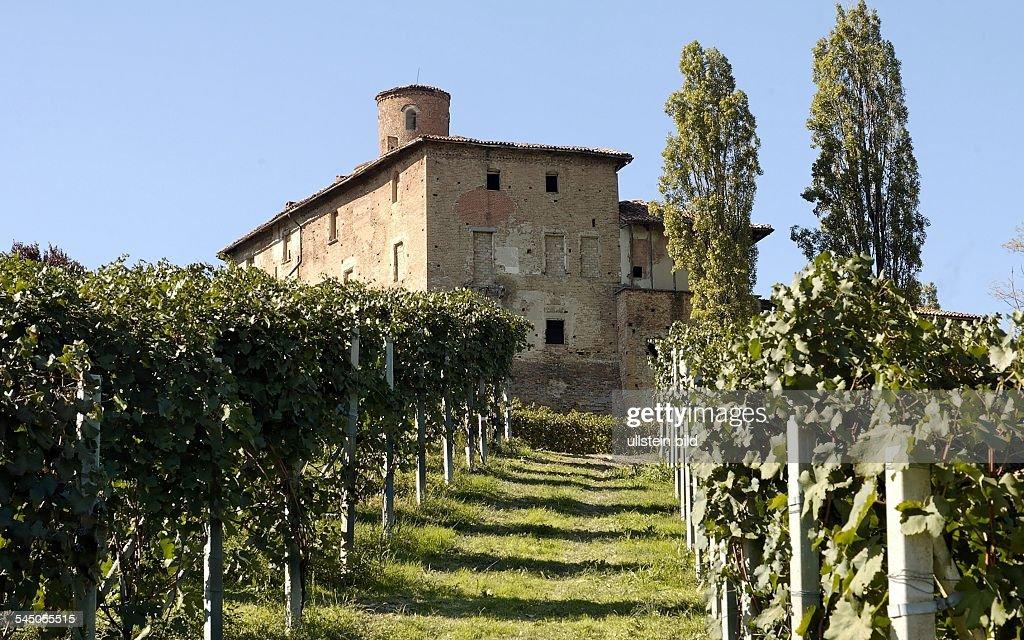Italy Piemont Langhe Vineyard near Barolo