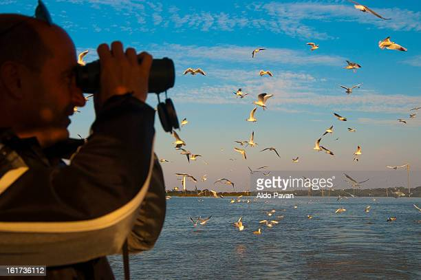Italy, Porto Tolle, seagulls in flight