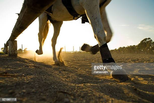 Italy, Rome, Horse galloping