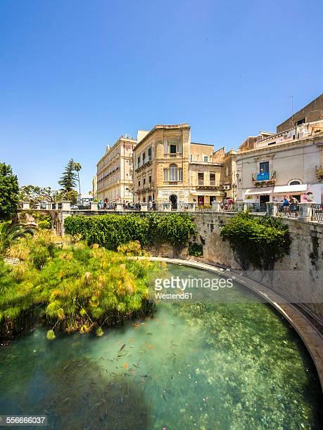 Italy, Sicily, Siracusa, Arethusa spring