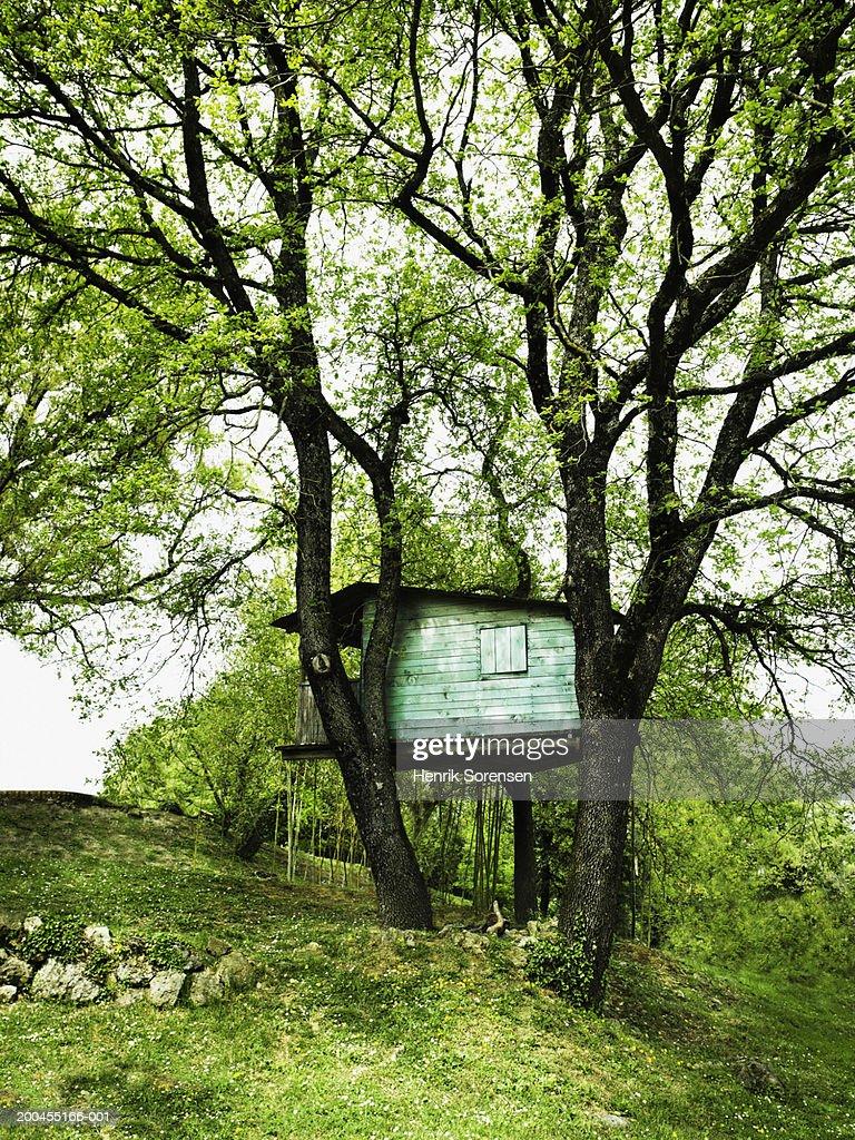 Italy, Sienna, treehouse : Stock Photo