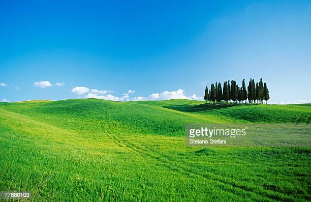Italy, Tuscany, Val d'Orcia, Cypresses on field